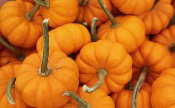 pumpkin for skin